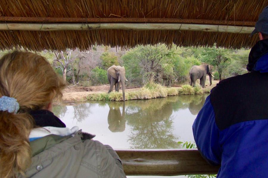 Makutsi Hippo Hide