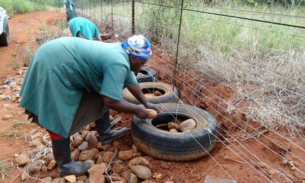 Makutsi fence repair